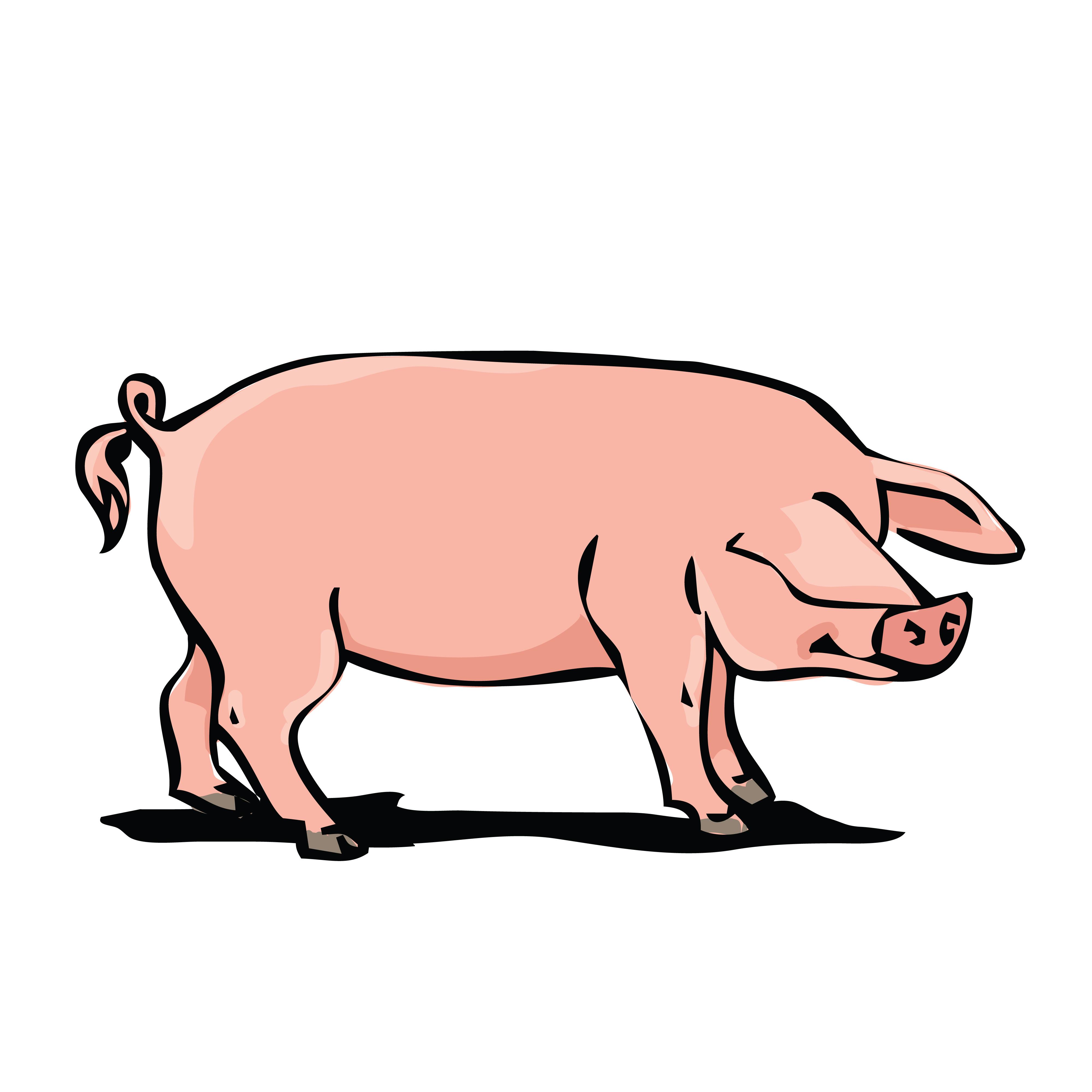 4000x4000 Free Clipart Of A Hog
