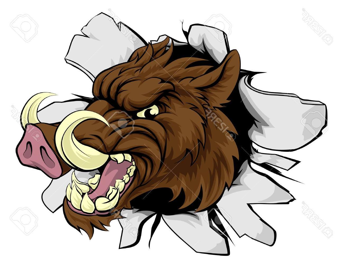1300x1019 Best Wild Boar Or Razorback Cartoon Sports Mascot Breaking Through