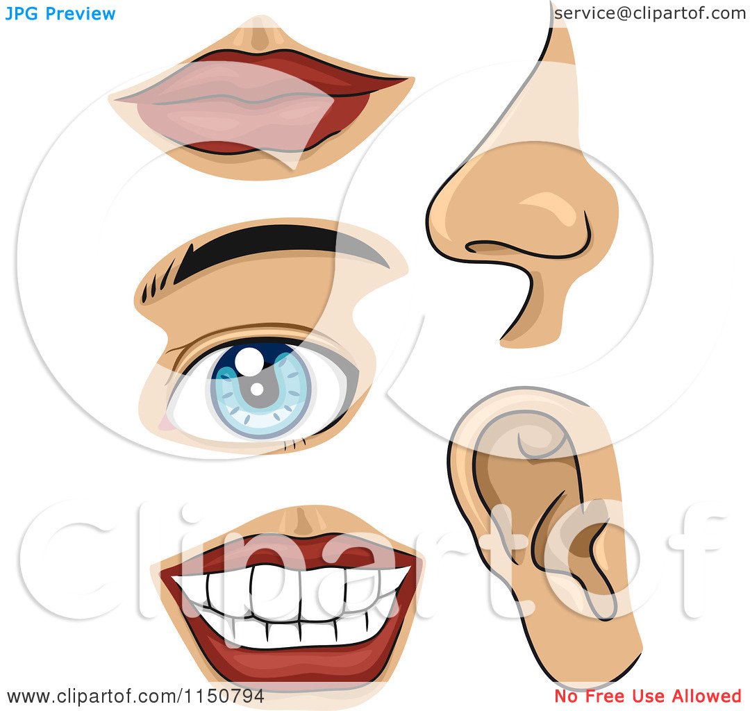 1080x1024 Human Part Clip Art With Name Human Body Parts Clipart Human Body
