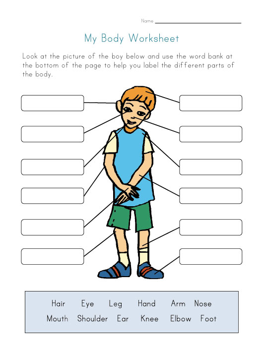 530x702 Cosy Label Body Parts Worksheet Easy Also Parts Of The Body Free