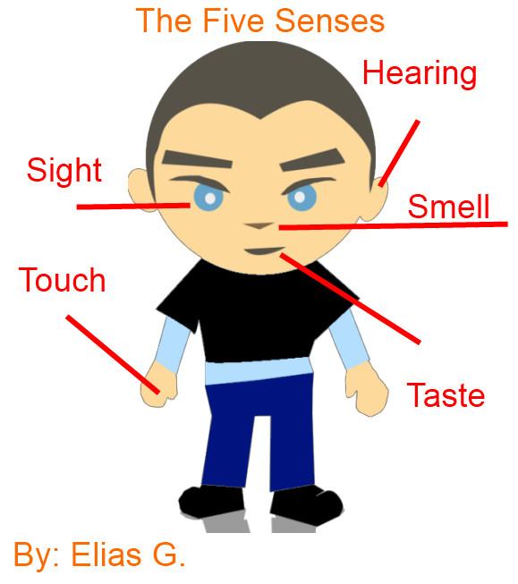 579x653 5 Senses Clip Art Free Five Senses Body Parts Five Senses