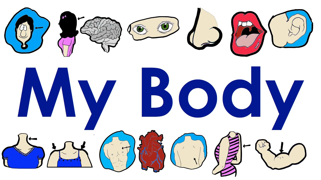1280x720 Parts Of The Body Vocabulary Practice Easy English Practice