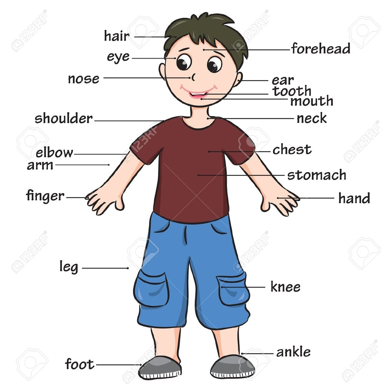 Human Body Parts For Kids Deep Photo Gallery In Website With Human