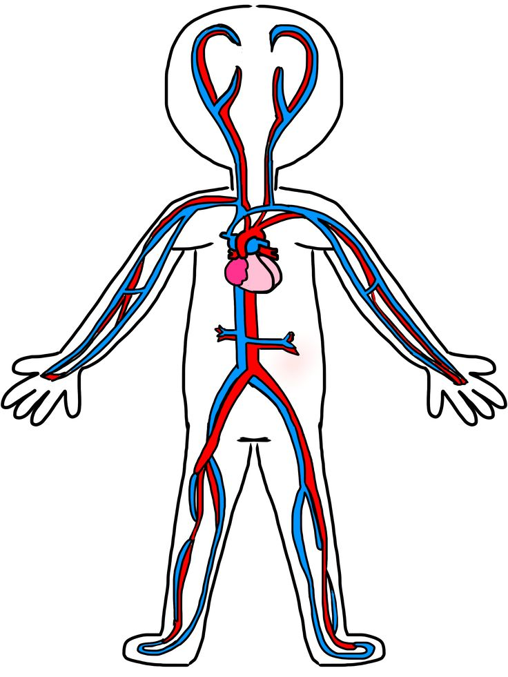 736x981 16 Circulatory System Drawing Kids Free Cliparts That You Can