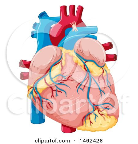450x470 Clipart Of A Medical Diagram Of Subserosal Uterine Fibroids