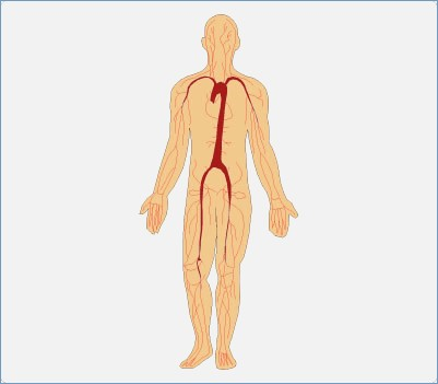 401x351 Human Body Systems Clipart Free