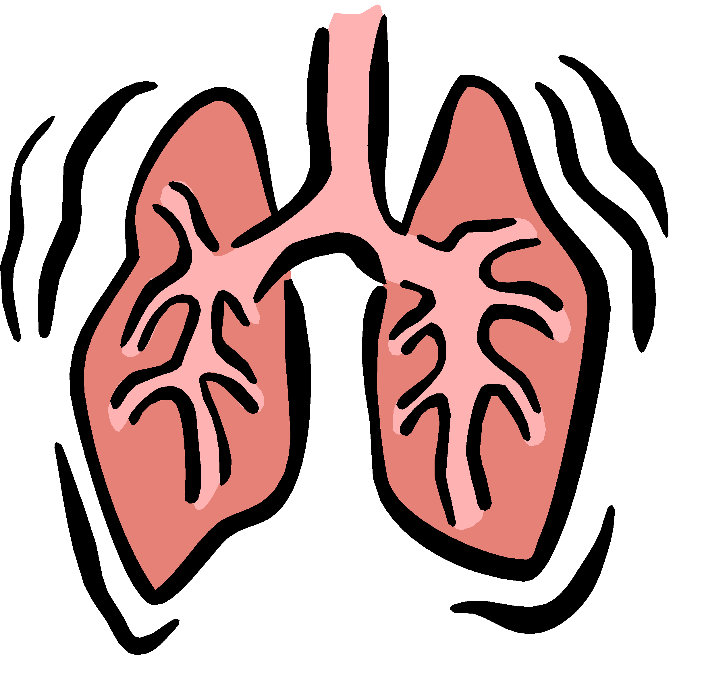 2444x2394 Small Lungs Cliparts