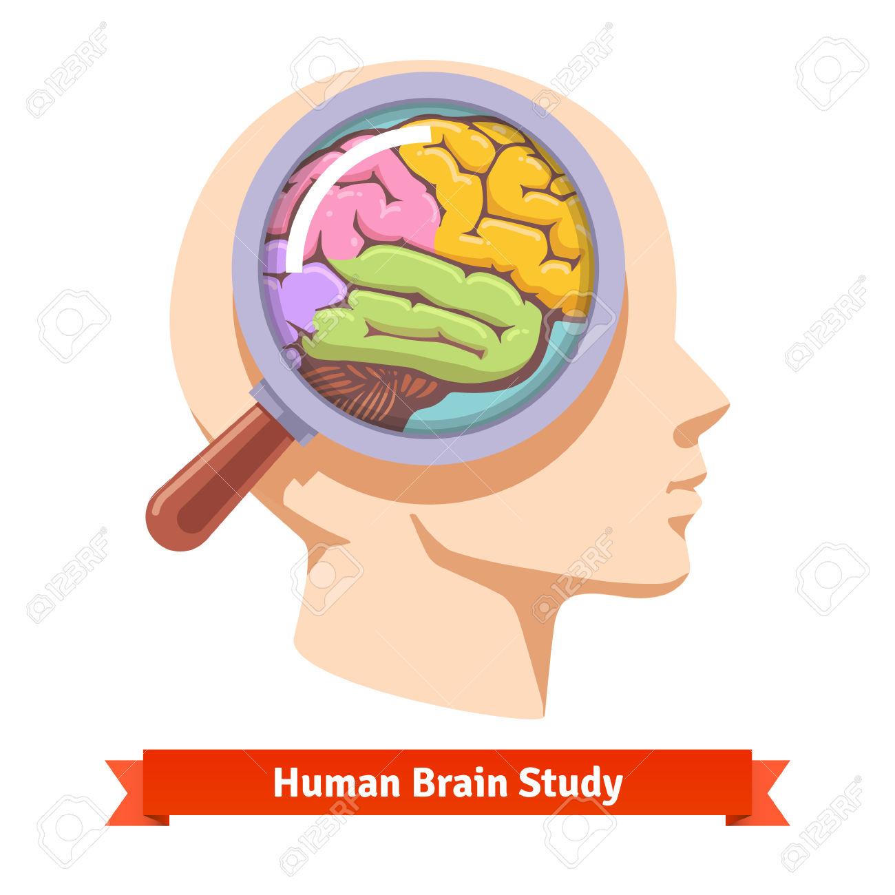 1300x1300 Brain Controls Body Clipart