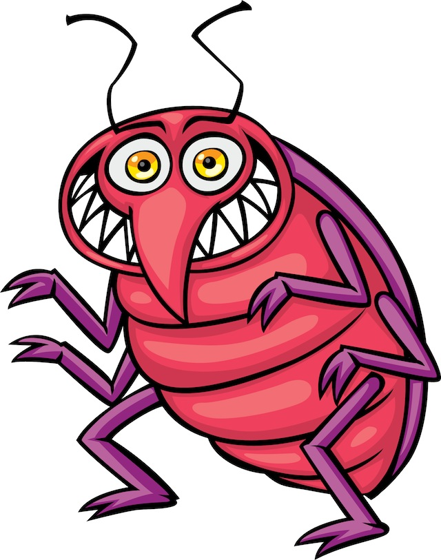 640x813 Bed Bug Photos, Clipart Images Amp Pics What Do Bed Bugs Look Like