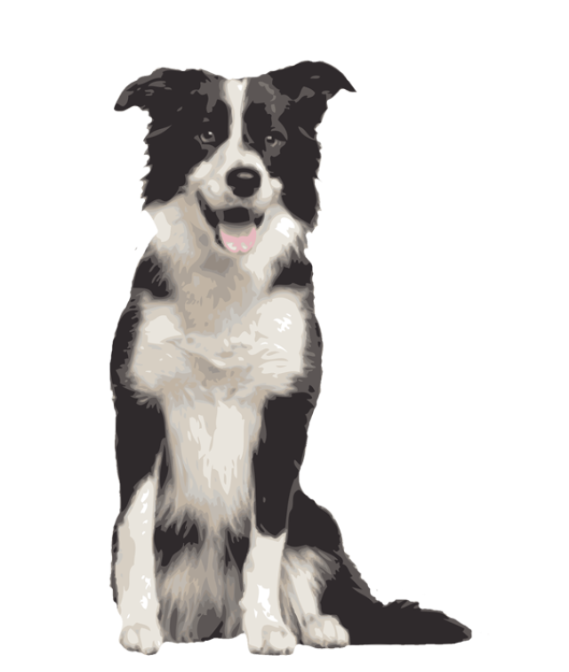 640x755 Quality Clip Art Of Animals That Live On A Farm Border Collie