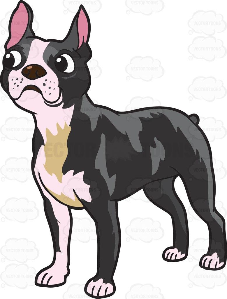 779x1024 Boston Terrier Clipart Cartoon