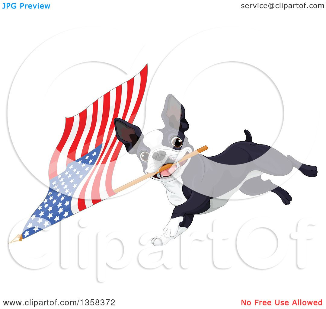 1080x1024 Clipart Of A Cute Boston Terrier Dog Running With An American Flag