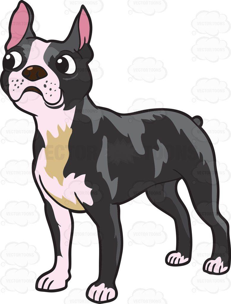 779x1024 Boston Terrier Clip Art