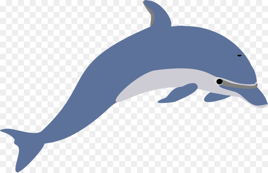 900x580 Dolphin Free Content Clip Art