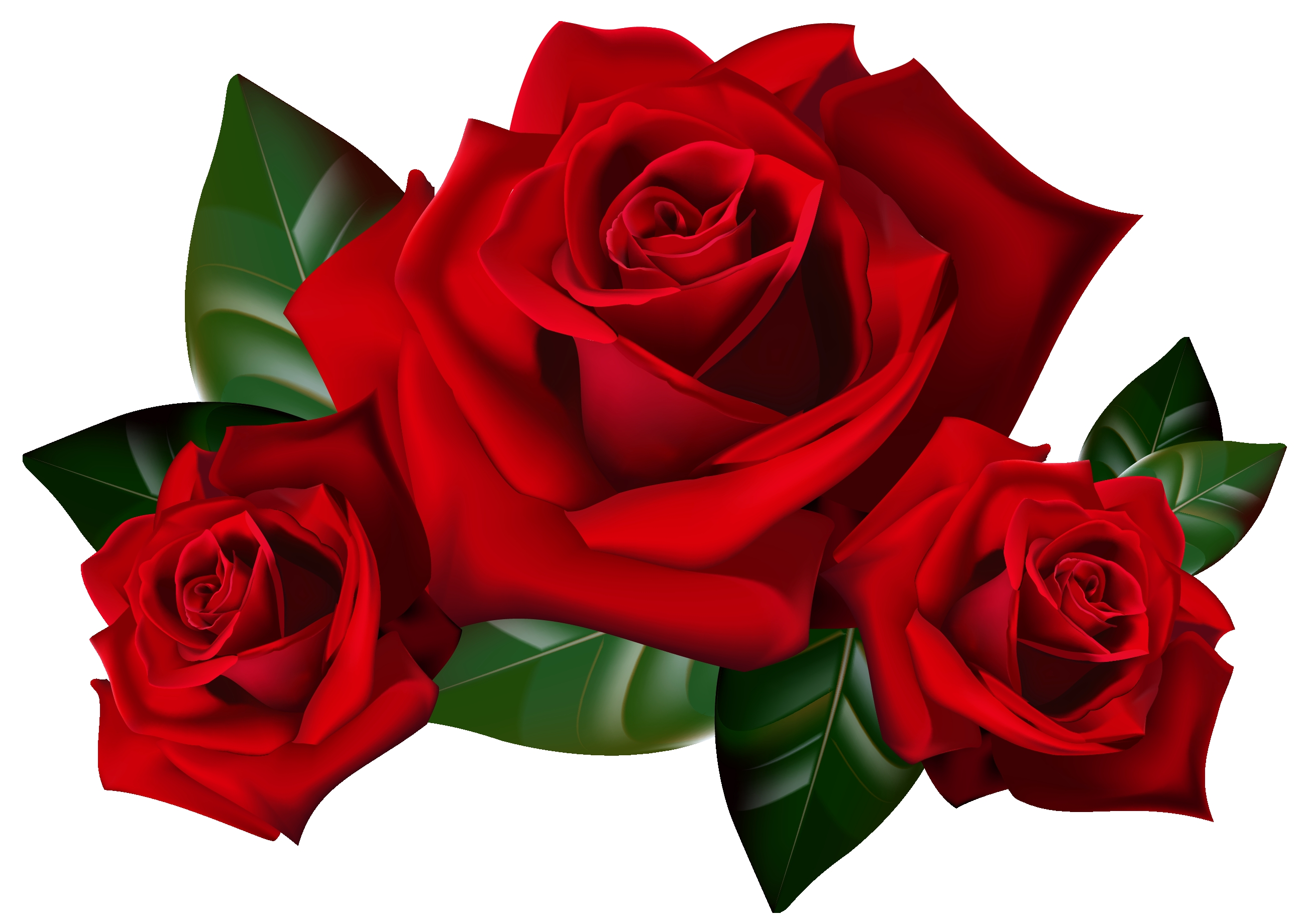 2586x1840 Fresh Rose Clipart Gallery