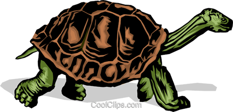 480x231 Tortoise Royalty Free Vector Clip Art Illustration Anim0373
