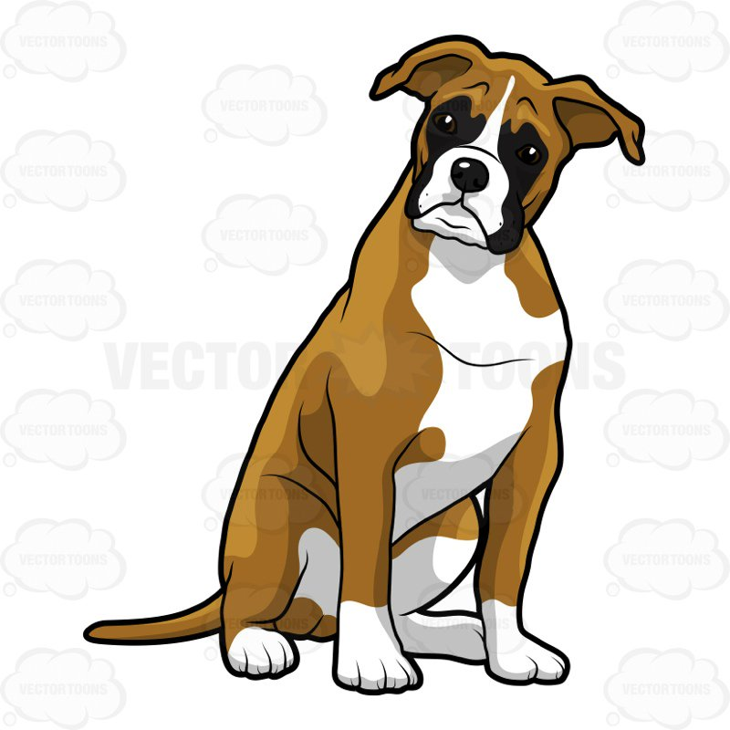 800x800 Boxer Dog Clipart Young Boxer Dog Sitting With Its Head Cocked