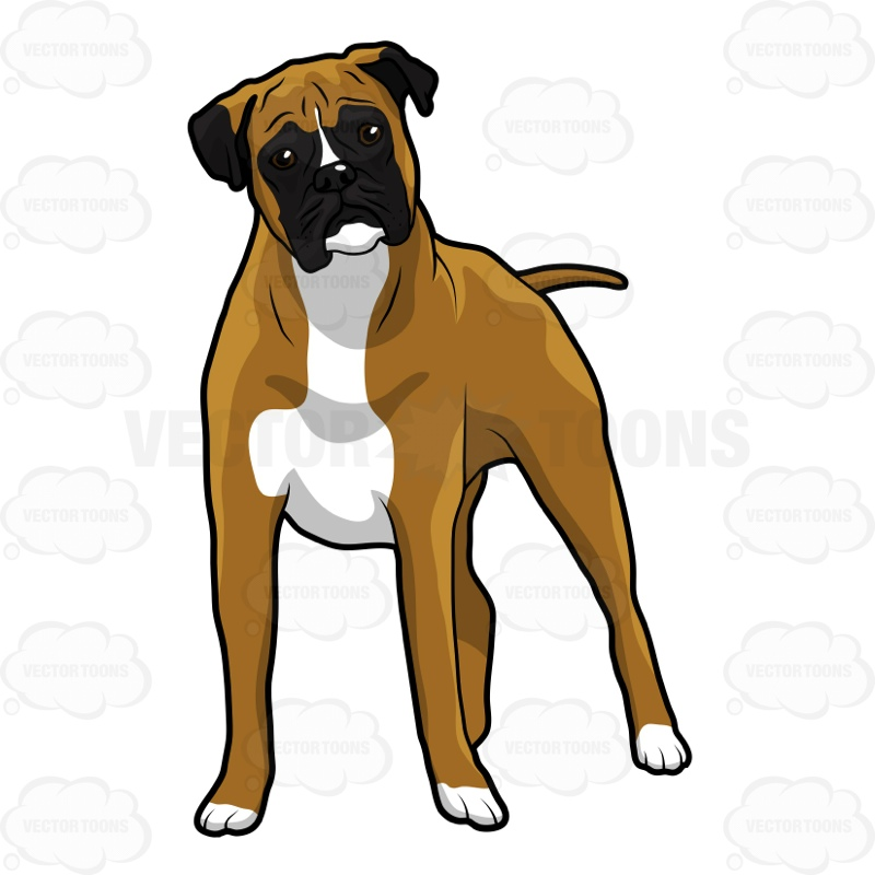 800x800 Boxer Standing Up Looking Ahead Cartoon Clipart Vector Toons
