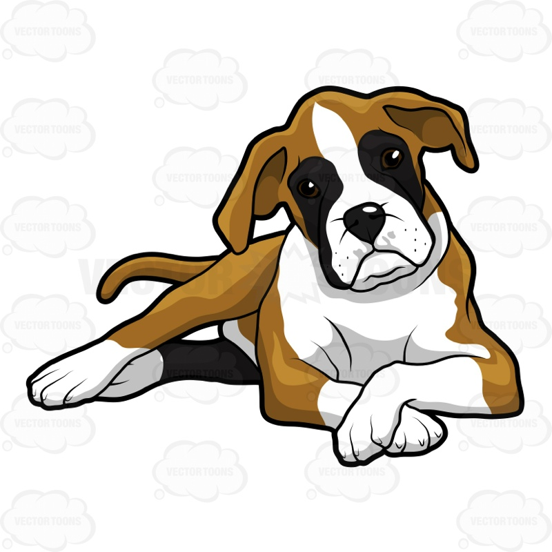 800x800 Cute Boxer Puppy Lying Down With Its Front Paws Crossed Cartoon