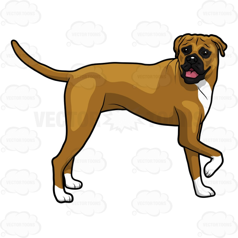 800x800 Side View Of A Boxer Dog Standing With One Paw Up Cartoon Clipart