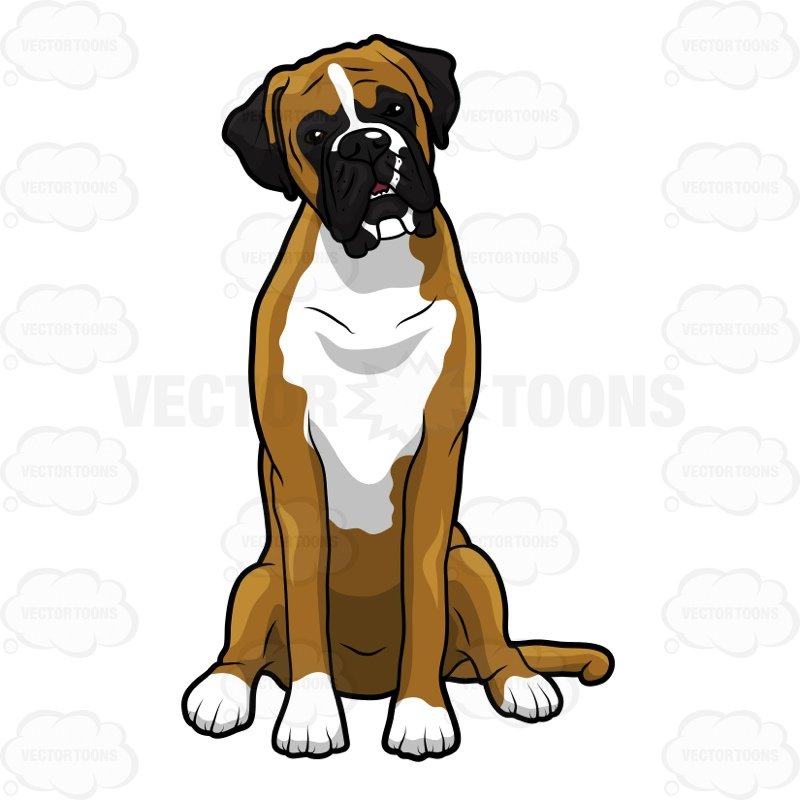 800x800 Boxer Dog Sitting And Looking Ahead Cartoon Clipart Vector Toons
