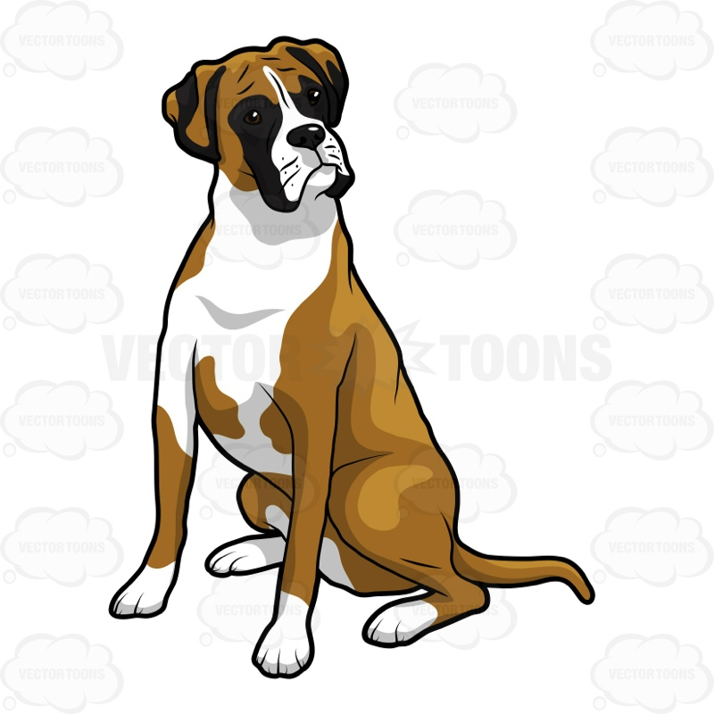 800x800 Boxer Sitting And Looking To Its Left Cartoon Clipart Vector Toons