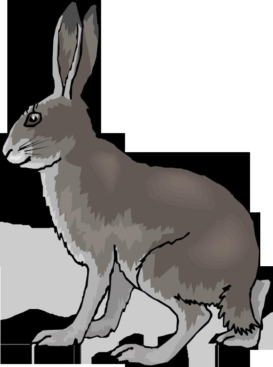 559x750 Grey Rabbit Clipart