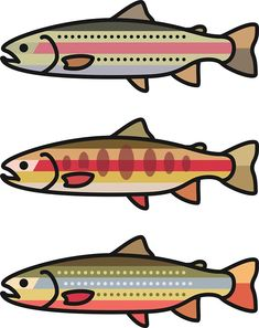 235x297 Golden Trout . Golden Trout Trout