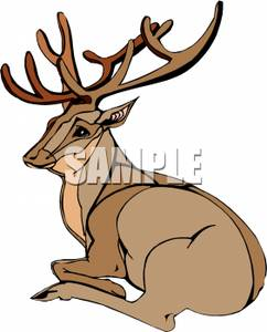 242x300 A Buck With Large Antlers Laying Down Clip Art Image