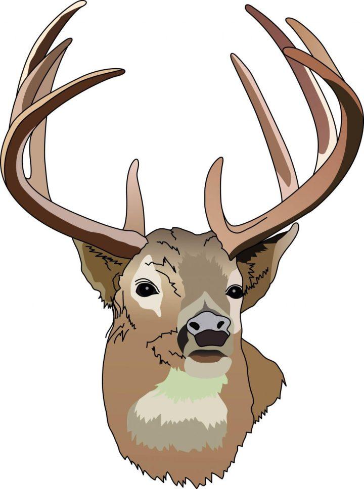 Best Funny Deer Hunting Cartoons Illustrations, Royalty ...   Deer Hunting Cartoon Clipart
