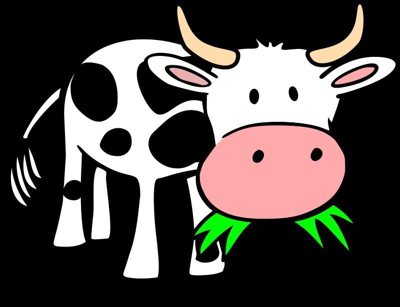800x615 Bulls Clipart Cute