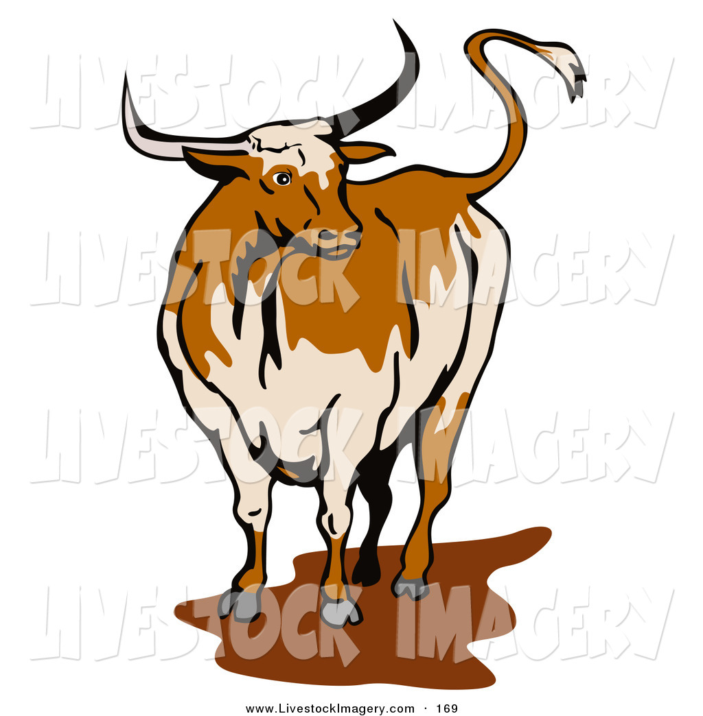 1024x1044 Royalty Free Bull Stock Livestock Designs