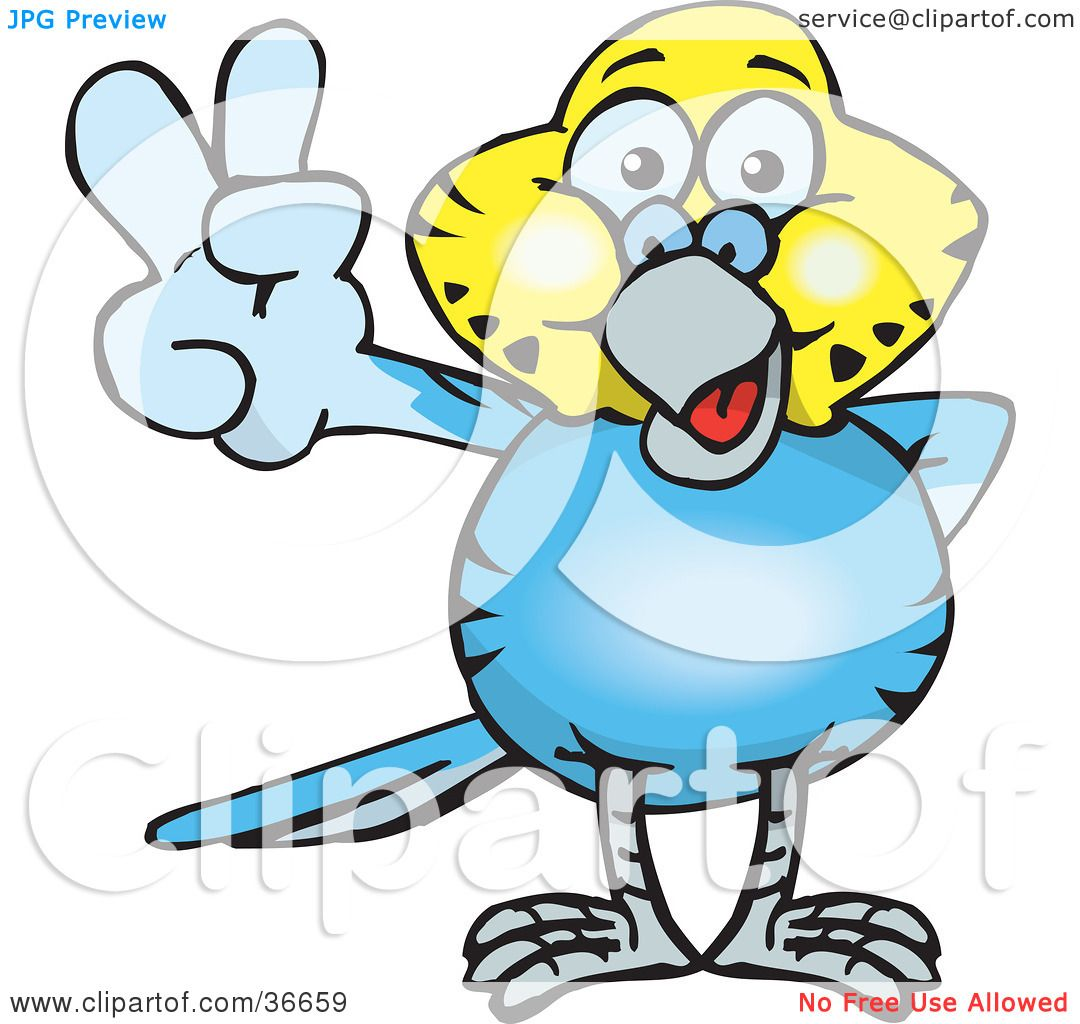 1080x1024 Clipart Illustration Of A Peaceful Blue And Yellow Budgie Smiling