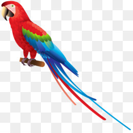 260x260 Parakeet Png And Psd Free Download