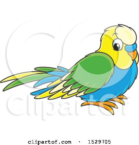 450x470 Royalty Free (Rf) Budgie Clipart, Illustrations, Vector Graphics