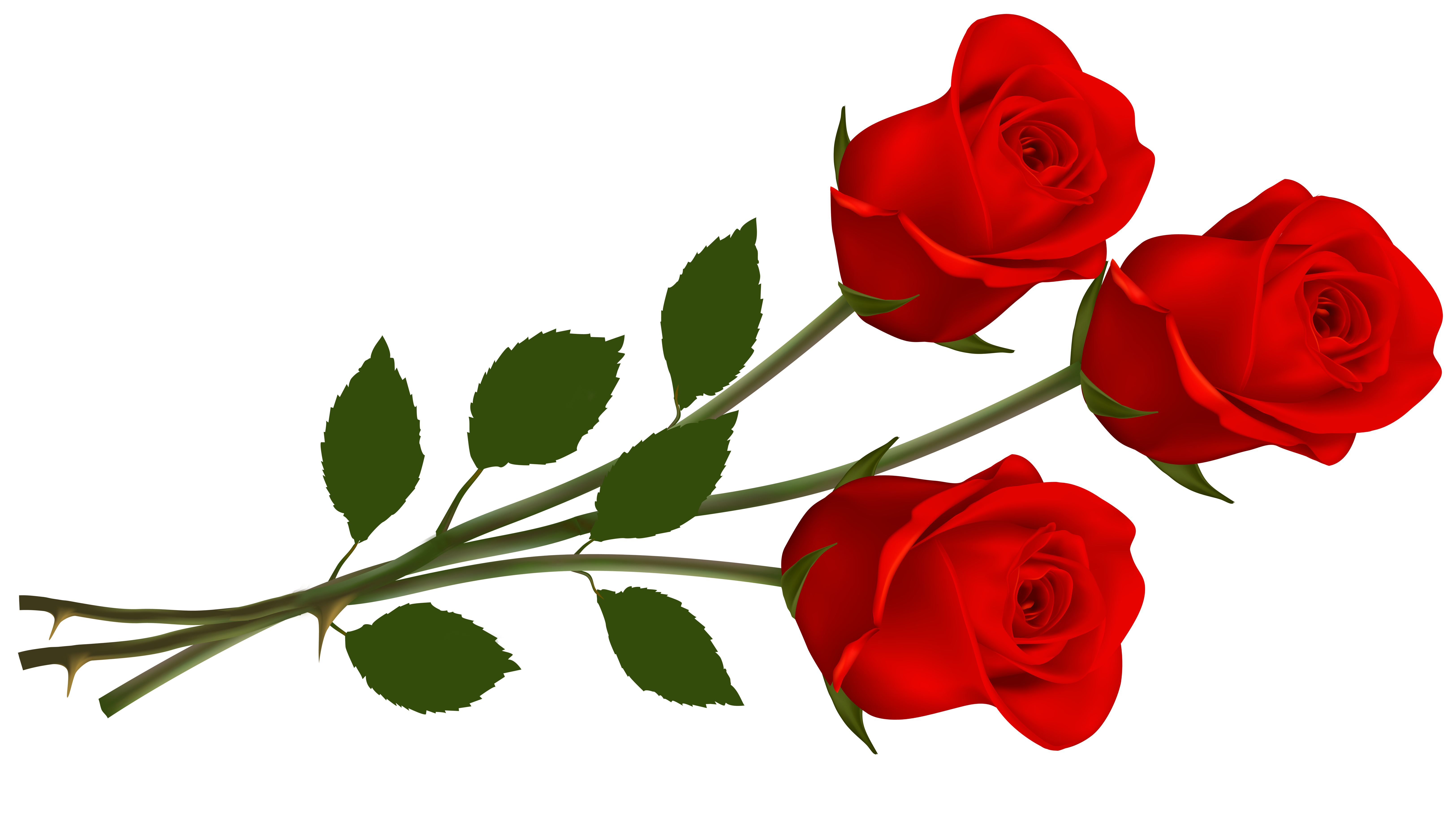 6500x3637 Clipart Roses