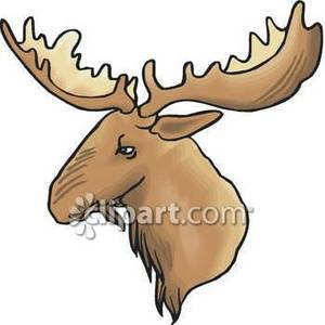 300x300 Majestic Moose Head