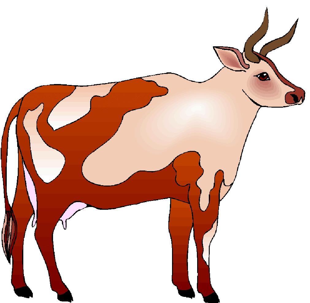 1011x988 Cow Bull Clipart
