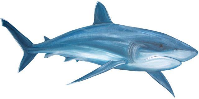 640x321 221 Best Sea Animals Clip Art Images On Shark, Sharks