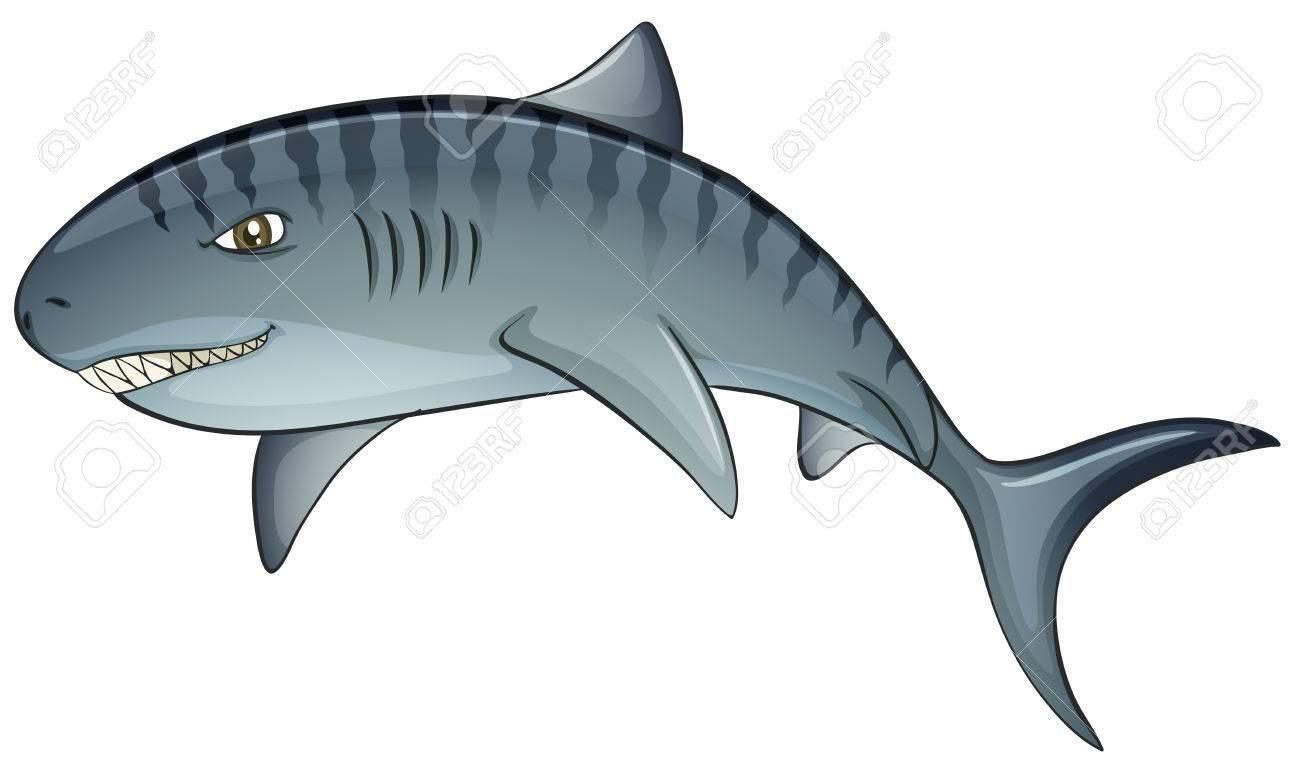 1300x763 Tiger Shark Clip Art Clipart Panda Free Images