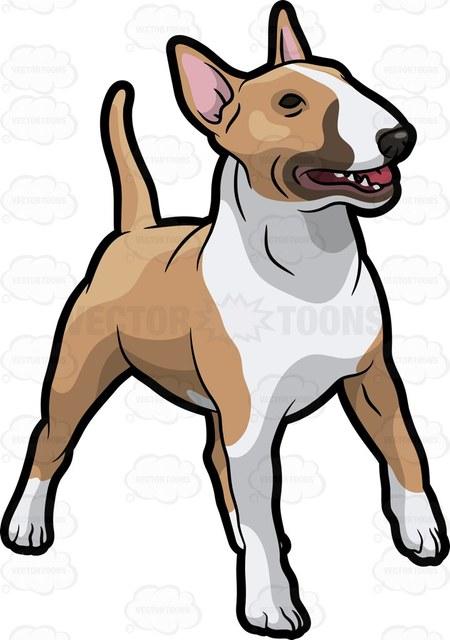450x640 An Attentive Bull Terrier Cartoon Clipart Vector Toons