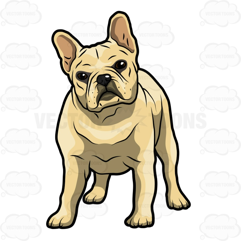 800x800 French Bulldog Puppies Clipart Vector Toons