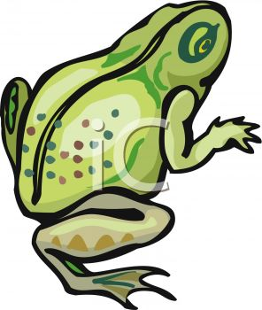 296x350 Picture Of A Frog On A White Background In A Vector Clip Art