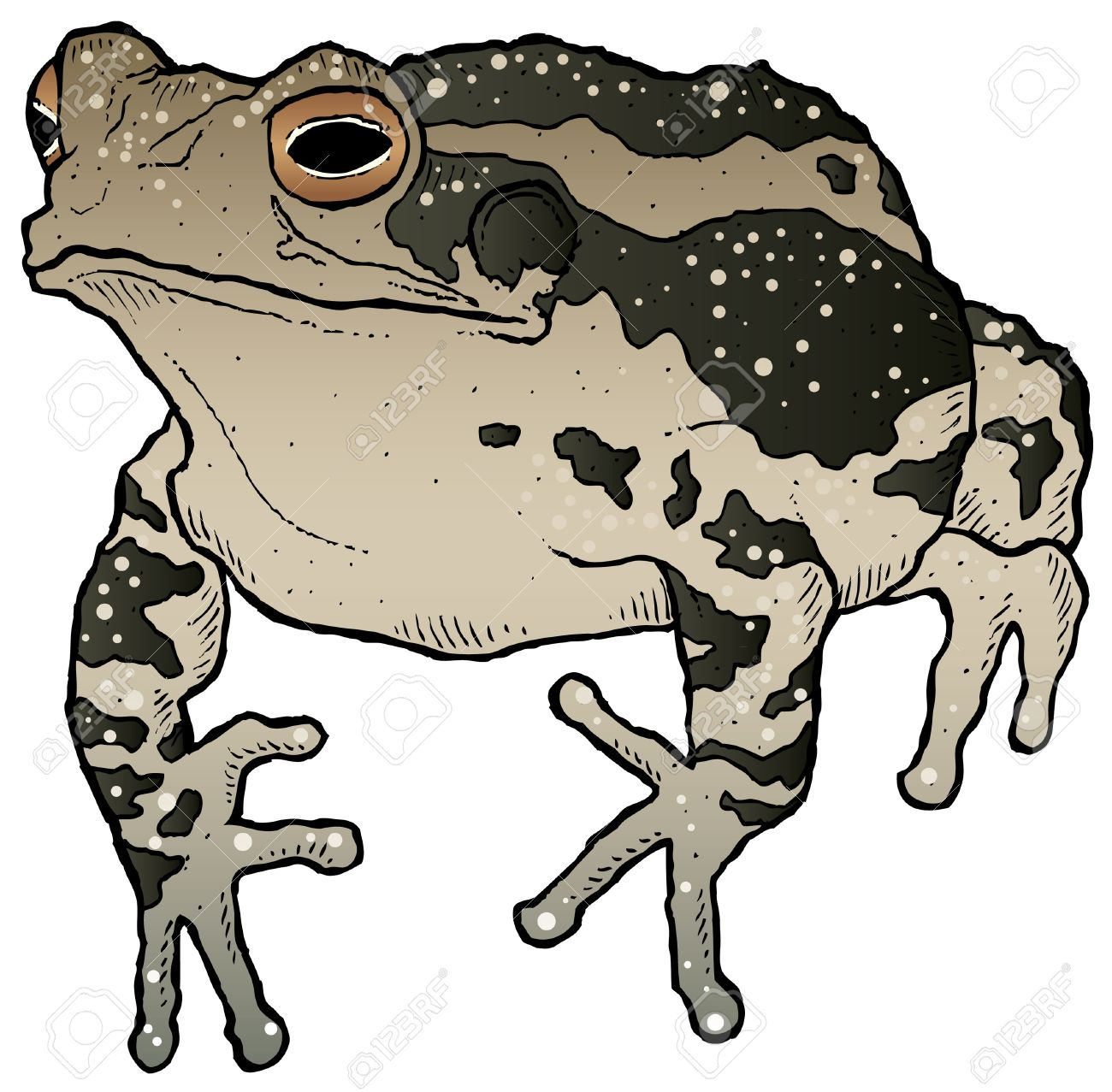 1300x1277 Top 90 Toad Clipart