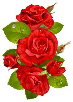 236x327 Transparent Rose Bouqet Red Clipart Png Image