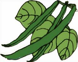 249x200 Green Bean Clip Art Amp Look At Green Bean Clip Art Clip Art Images