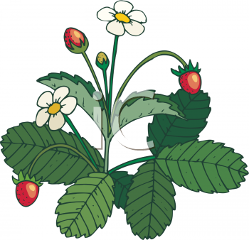350x338 Collection Of Berry Bush Clipart High Quality, Free Cliparts