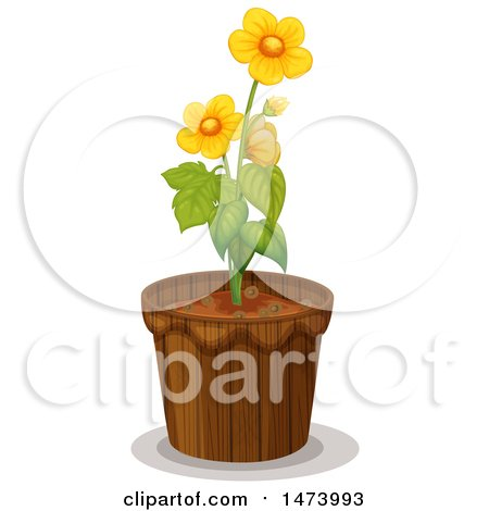 450x470 Royalty Free (Rf) Buttercup Clipart, Illustrations, Vector Graphics