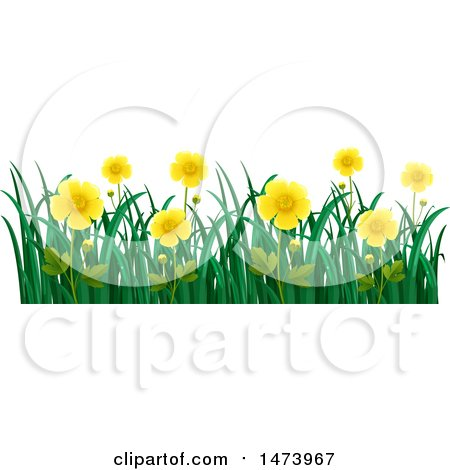 450x470 Royalty Free (Rf) Buttercup Flower Clipart, Illustrations, Vector