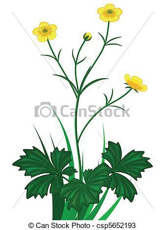 337x470 Buttercup Clipart Flower Bud 3115574